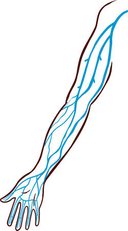 vector illustration of a the major veins of the arm.  Illustration