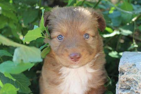 pity: Puppy