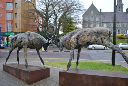 co  kerry: Deers in Killarney, Co Kerry Editorial
