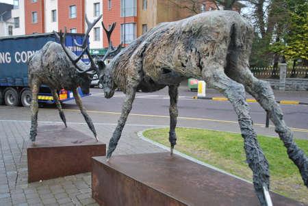 kerry: Deers in Killarney, Co Kerry Editorial