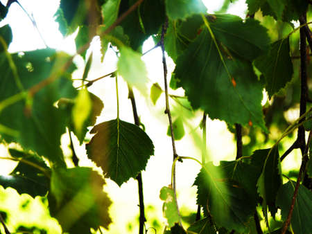 Ivy with blurred out background. Edited to look brighter.