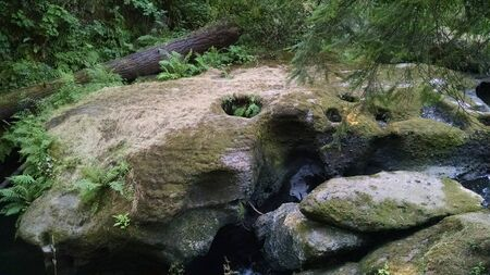 vegatation: Trail Rock