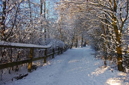 Winter Wonderland Stock Photo - 7196904