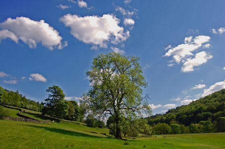 Summer sun with tree and clouds photo