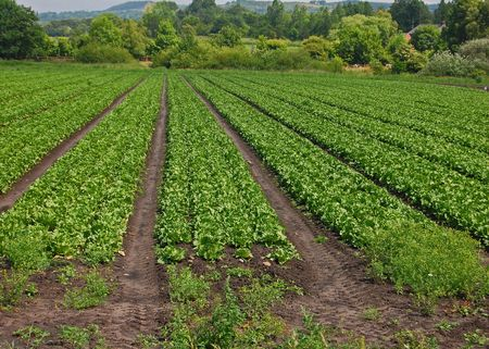 fertile land: Engklands Rural Countryside