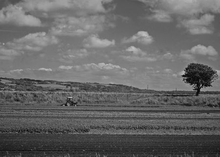 Tractor in the british countryside with tree and cultivated fields photo
