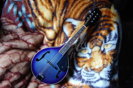 mandolin: Blue mandolin with tiger