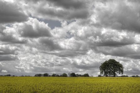 The English countryside with clouds and rapeseed photo