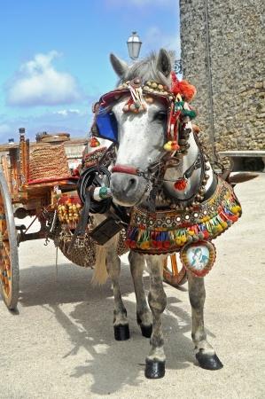 sycylijski: Tradycyjne sycylijskie Kucyk i koszyk Zdjęcie Seryjne