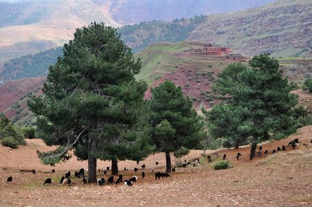 Typical Moroccan scenery in the high atlas region of the area Stock Photo