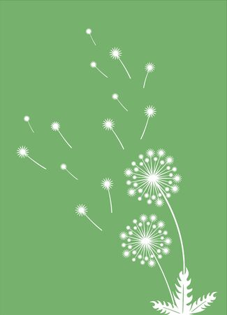 Wall or windows sticker for home decoration. Decal with dandelion and flying seeds. Vector silhouettes.