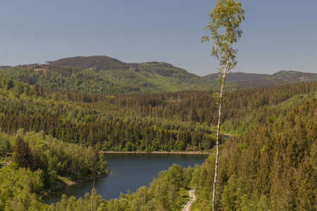view to the barrier lake on a sunny day from a hiking trail in the national park Harz in Germany with a lonely birch tree in foreground
