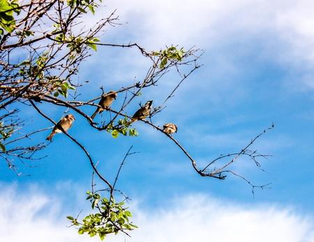 Un groupe d'oiseaux sur une branche d'arbre Banque d'images - 21012043