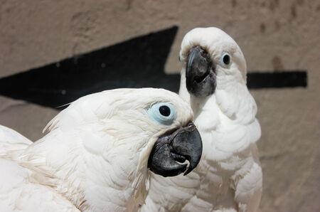 Deux cacatoès sur leur perchoir dans la ville de Cannes Banque d'images - 23328184
