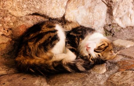 Un chat dormant dans une rue du village Banque d'images - 23328182