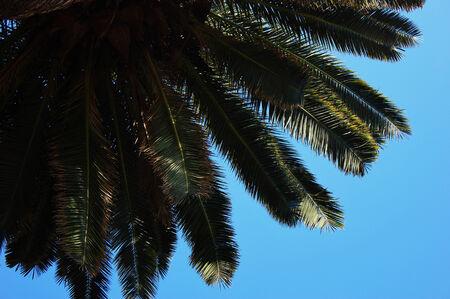 Détail d'un palmier dans le ciel bleu à Cannes Banque d'images - 23328183