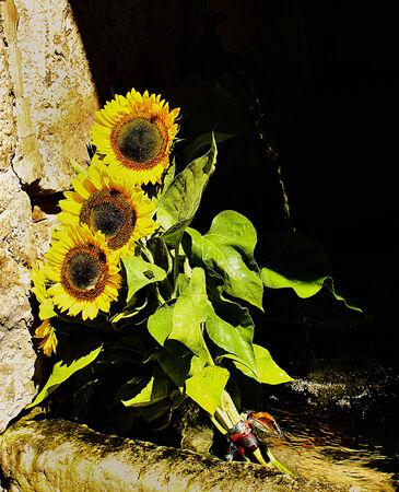 a bouquet of sunflowers Banque d'images