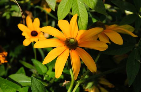Bouquet de fleurs jaunes en été Banque d'images - 31048422