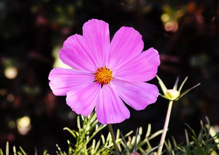 Petite fleur pourpre Banque d'images - 31048424
