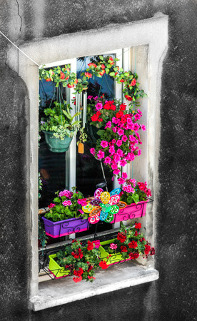 the flowered window in the city