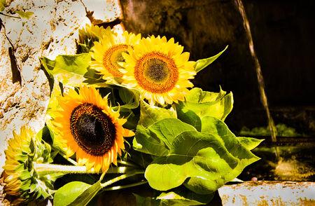 Un bouquet de tournesols Banque d'images - 31106182