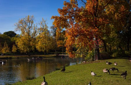 Bois de Vincennes à Paris avec geeses Banque d'images - 77499425