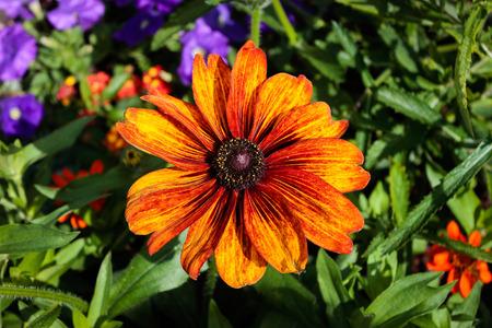 Petite fleur d'oranger Banque d'images - 77578614