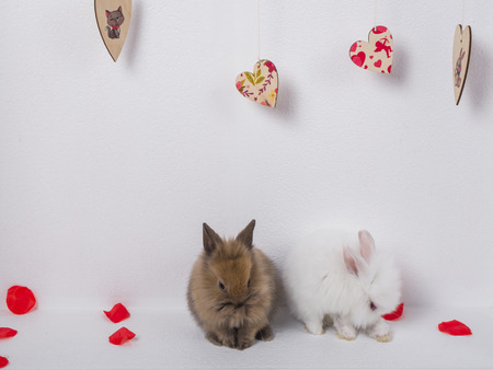 Two adorable rabbit on a white background