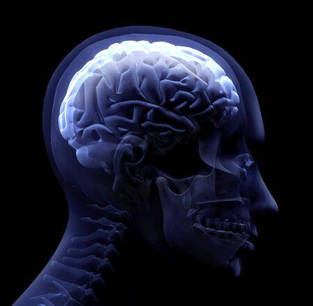 脳 写真素材 - 773175