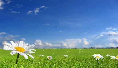 Blumen Standard-Bild - 939207
