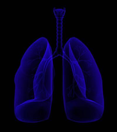 lungs Zdjęcie Seryjne