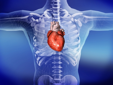 3d illustration with the heart Standard-Bild