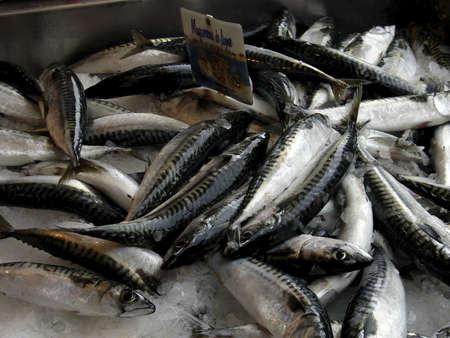 haul: Fresh Mackerel Normandy Fish market