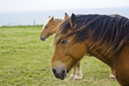 Horses along the coast of Normandy France Stock Photo - 2370942