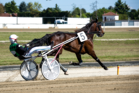 Trotting Races at the Hippodrome - Horse during Harness Race Editorial