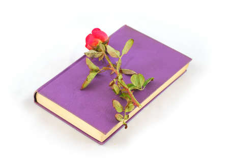 Romantic  rose over book purple on white background Stock Photo