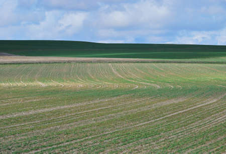 Big green cultivated field under blue sky suggests calm and solitude Stock Photo