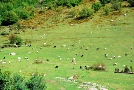 Beasts on a green slope of the mountain photo