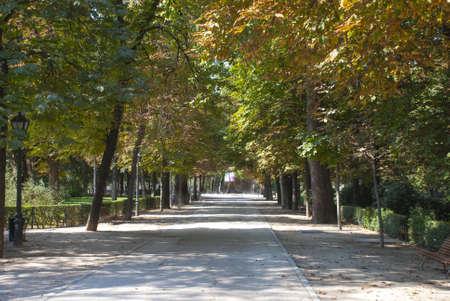 mediodía: Los �rboles en el parque en el mediod�a de primavera.