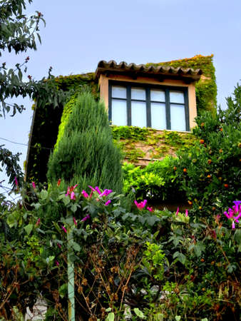 House with windows and plants in the village Stock Photo - 20878251