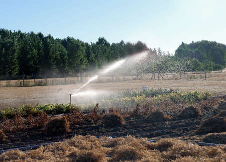 Irrigation in cultivated field and blue sky photo