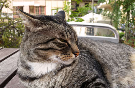 white moustache: Cat with white moustache in siesta