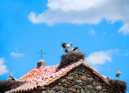 clergy: Storks in its nest in the belfry of a rural church