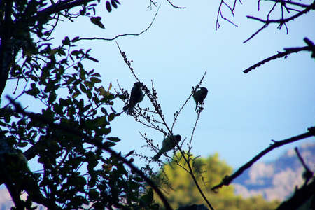 insectivorous: Birds on branches in de meadow