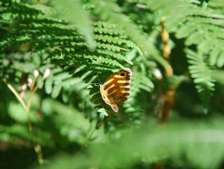 mimicry: Animal mimicry in the woods