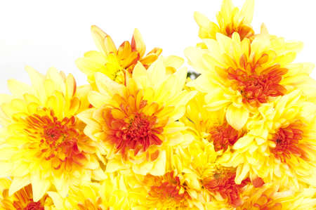Autumn bouquet  yellow chrysanthemums isolated on white Stock Photo