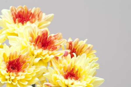 Autumn bouquet  yellow chrysanthemums