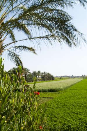 Green tropical field