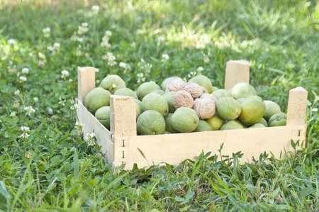 Box of walnuts in a garden