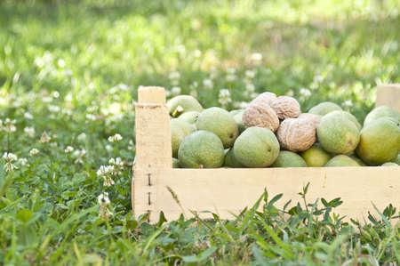 Fresh walnuts in a box Stock Photo